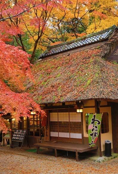 京都賞紅葉
