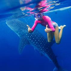 與鯨共舞、海豚追蹤、薄荷島 5天