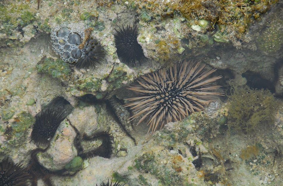 潮間帶的生物