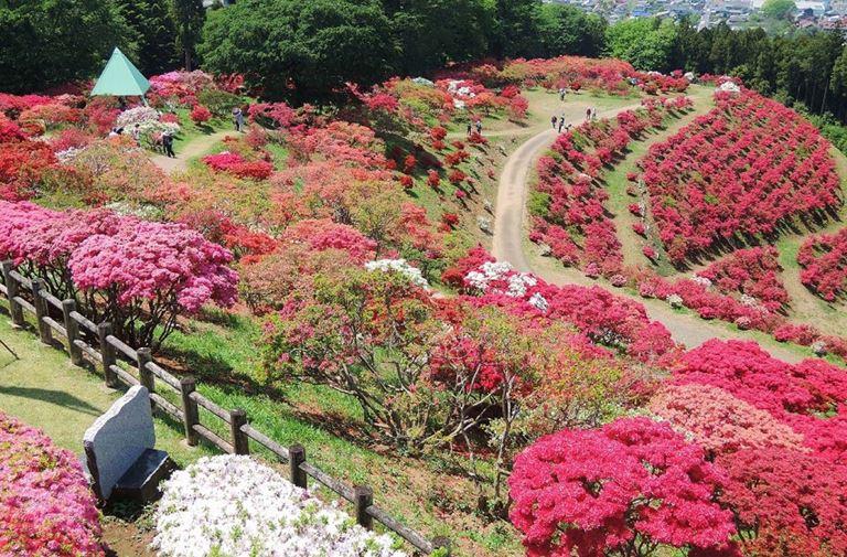 笠間杜鵑花公園