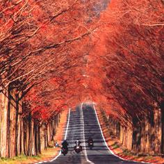日本隱藏版紅葉在哪