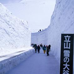 立山黑部雪牆散策