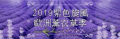 歐洲紫色浪漫薰衣草