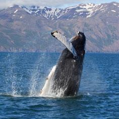 鯨艷冰島全覽金環10天