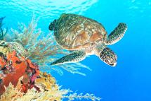 珍愛小琉球 守護海龜 2日