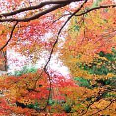 深秋飄紅~馬那邦山、龍騰鐵道自行車、美人湯溫泉2天