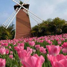 一秒到荷蘭》前進中社觀光花市