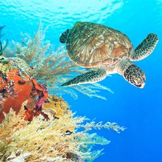 珍愛小琉球守護海龜輕鬆遊2天【振興有禮‧加碼送千】