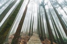 專人專車◎走在雲端日月潭、 阿里山太平雲梯3天