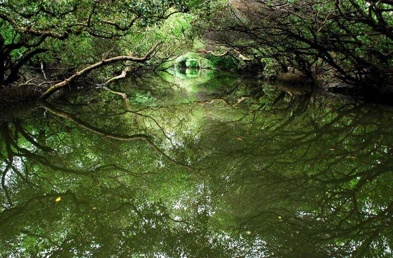 四草綠色隧道